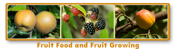 fruit_food_growing